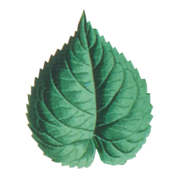 Mulberry leaf extract improves glycaemic response and insulaemic response to sucrose in healthy subjects: results of a randomised, double-blind, placebo-controlled study.